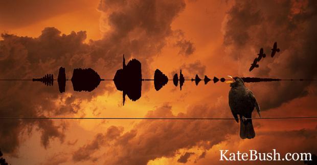 Birdsong.